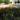 Могила первого секретаря комсомольской ячейки с. Покровка Ленцова А.Ф., Покровка