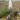 Братская могила жителей станицы Распопинской, расстрелянных фашистскими захватчиками, ст. Распопинская